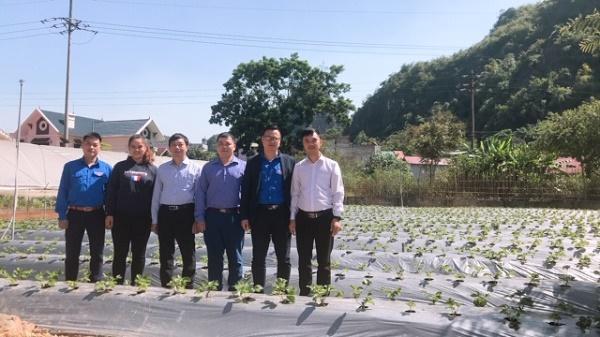 Đoàn viên trẻ khởi nghiệp từ nông nghiệp sạch