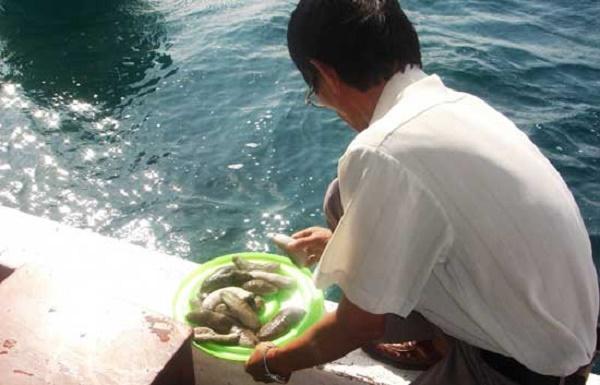 Kỹ thuật nuôi hải sâm