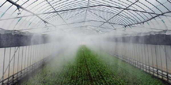 Nhật Bản với mô hình trồng rau thông minh