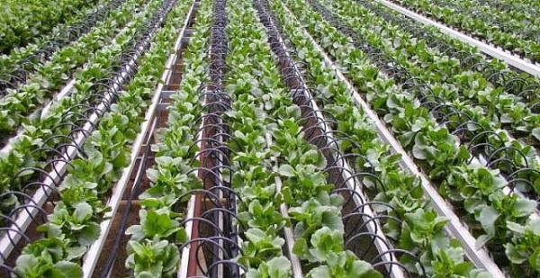 Những công nghệ chống hạn hán trong nông nghiệp đáng lưu ý