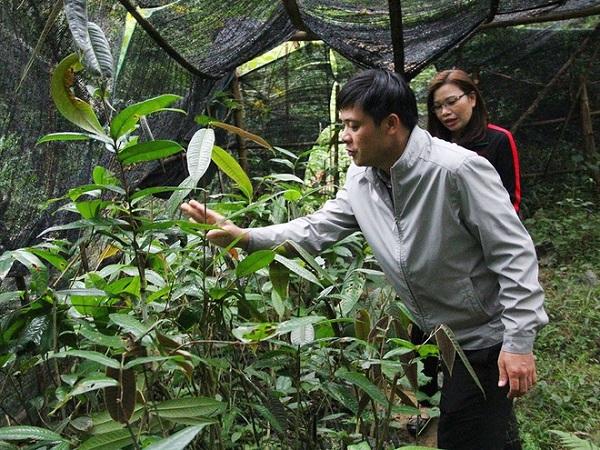Thuần dưỡng 'báu vật' của rừng
