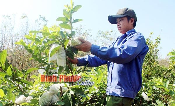 Khởi nghiệp thành công từ nông nghiệp